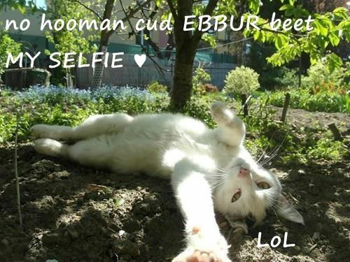no hooman cud EBBUR beet MY SELFIE ♥                          LoL