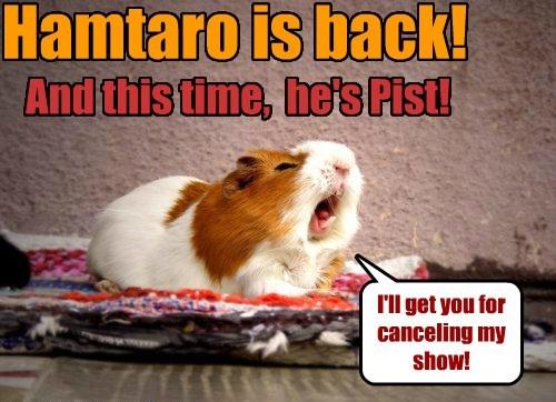 Hamtaro Is Back!