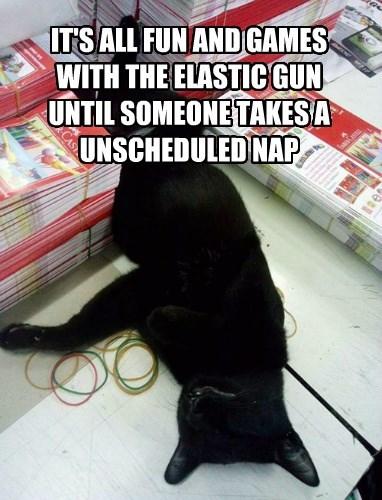 rubber bands,nap,Cats