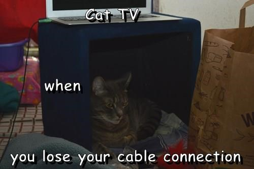 Cat TV       when  you lose your cable connection