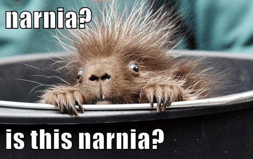 narnia?  is this narnia?