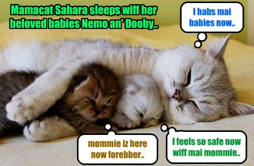 Mamacat Sahara habs teh best sleep ob her lifes sinse she habs ben reunited wiff her kits Nemo an' Dooby.. And Nemo an' Dooby can now sleep thru teh nite wiffout awaking wiff a teary sadness because dey miss der mommie..