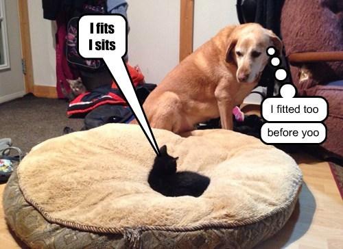 cat,dogs,i fits i sit