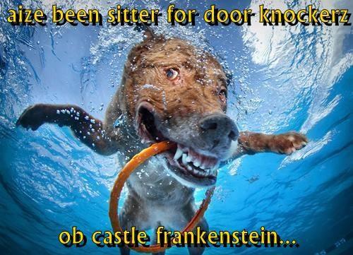 aize been sitter for door knockerz                                                                              ob castle frankenstein...