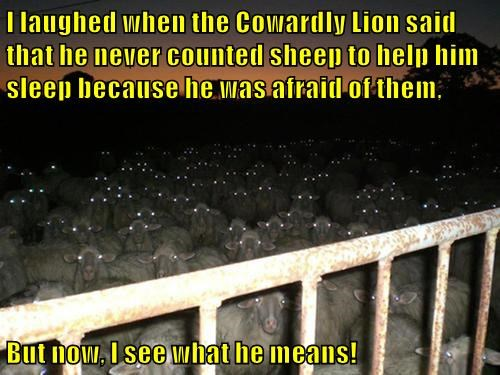 I laughed when the Cowardly Lion said that he never counted sheep to help him sleep because he was afraid of them,  But now, I see what he means!