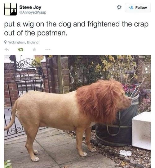 funny-twitter-prank-dog-lion