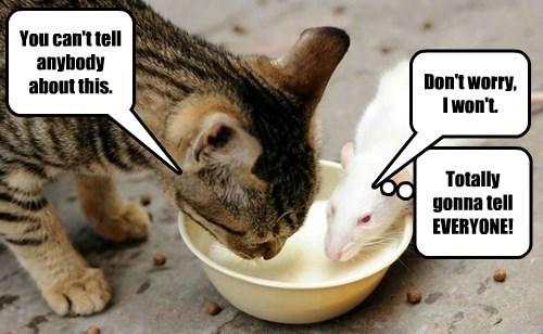 captions,Cats,funny