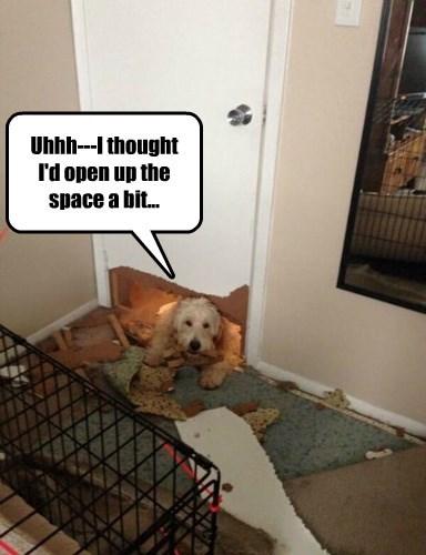 door,dogs,ruined