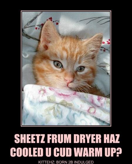 SHEETZ FRUM DRYER HAZ  COOLED U CUD WARM UP?