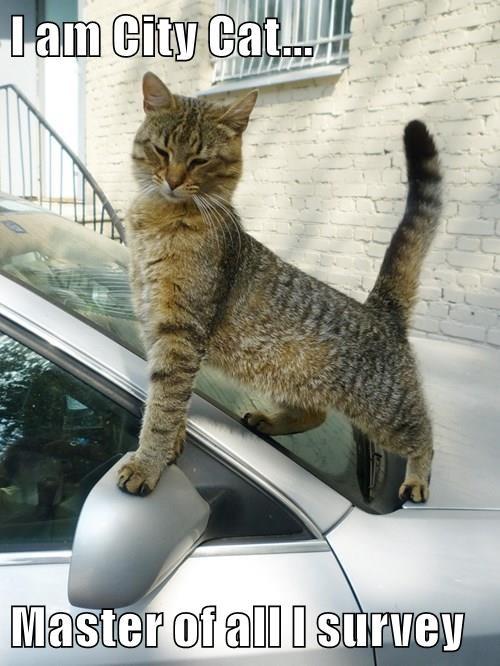 I am City Cat...  Master of all I survey