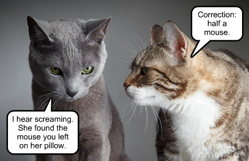Cats: masters of that extra touch that means so much.
