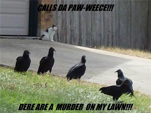 CALLS DA PAW-WEECE!!!          DERE ARE A  MURDER  ON MY LAWN!!!