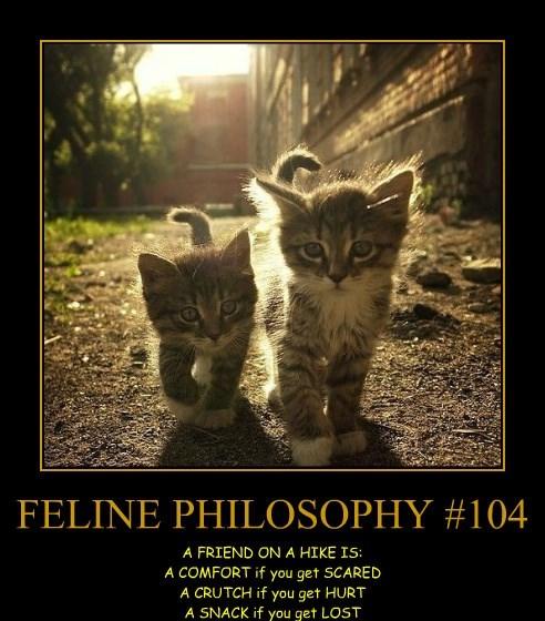 FELINE PHILOSOPHY #104