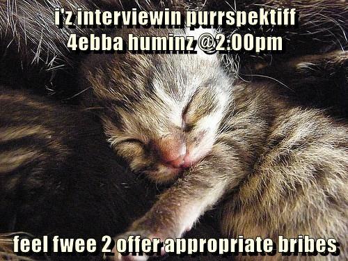 i'z interviewin purrspektiff                                    4ebba huminz @2:00pm   feel fwee 2 offer appropriate bribes