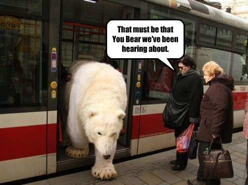 That must be that You Bear we've been hearing about.