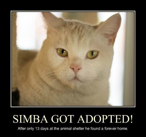 SIMBA GOT ADOPTED!