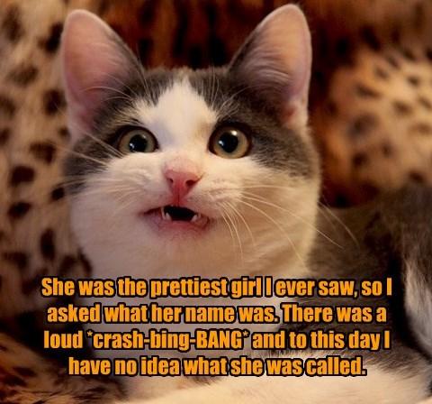 Cats,name,pretty