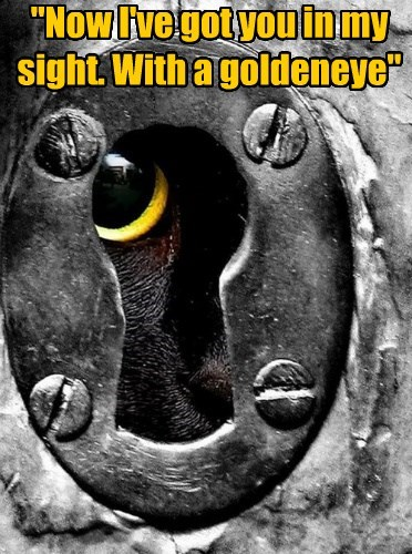 """""""Now I've got you in my sight. With a goldeneye"""""""