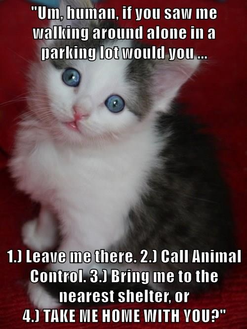 """""""Um, human, if you saw me walking around alone in a parking lot would you ...  1.) Leave me there. 2.) Call Animal Control. 3.) Bring me to the nearest shelter, or                                              4.) TAKE ME HOME WITH YOU?"""""""
