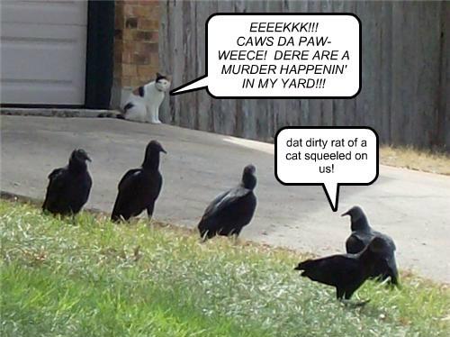 EEEEKKK!!!  CAWS DA PAW-WEECE!  DERE ARE A MURDER HAPPENIN' IN MY YARD!!!