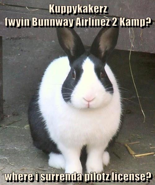 Kuppykakerz                                                     fwyin Bunnway Airlinez 2 Kamp?  where i surrenda pilotz license?