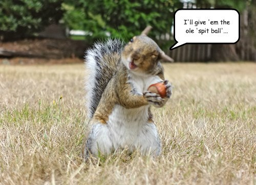 squirrel,baseball