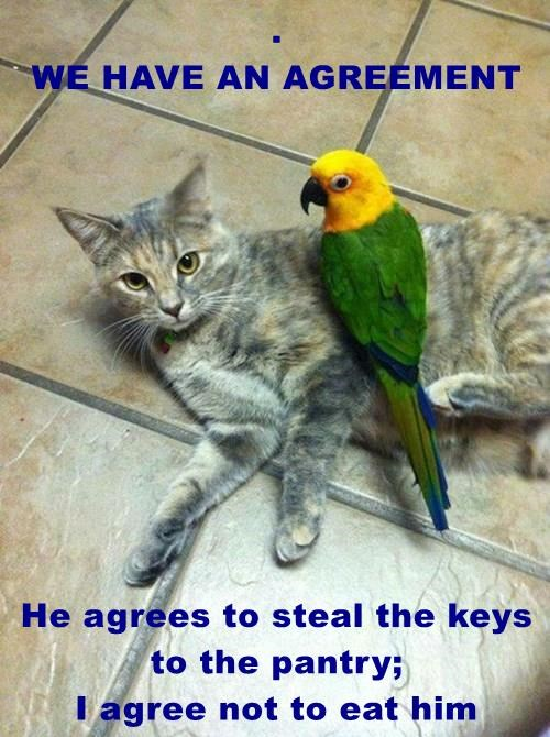 .                                                   WE HAVE AN AGREEMENT  He agrees to steal the keys to the pantry;                               I agree not to eat him