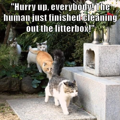 """""""Hurry up, everybody! The human just finished cleaning out the litterbox!"""""""