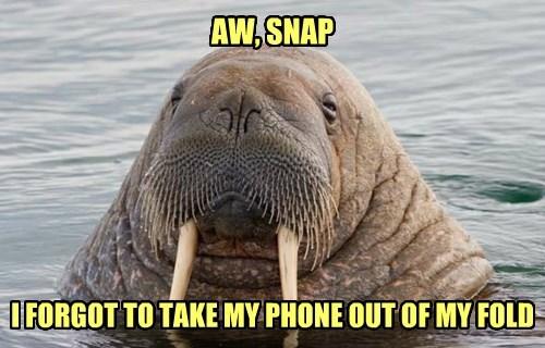 water,phone,walrus