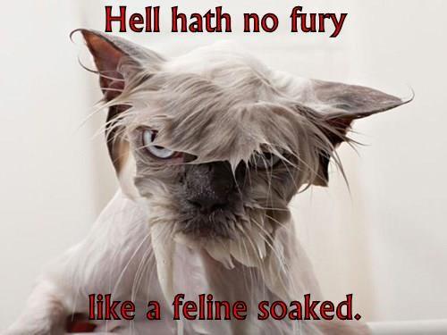 Hell hath no fury  like a feline soaked.