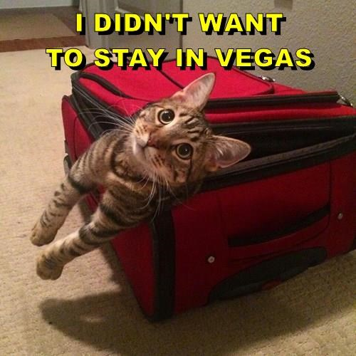 I DIDN'T WANT                                TO STAY IN VEGAS