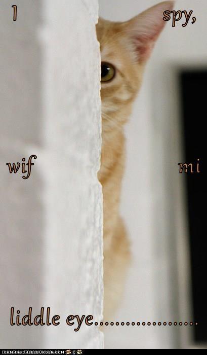 I                          spy, wif                          mi liddle eye....................