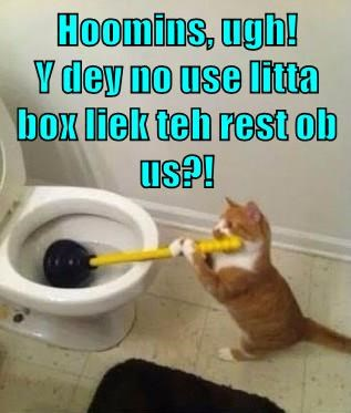 Hoomins, ugh!            Y dey no use litta box liek teh rest ob us?!