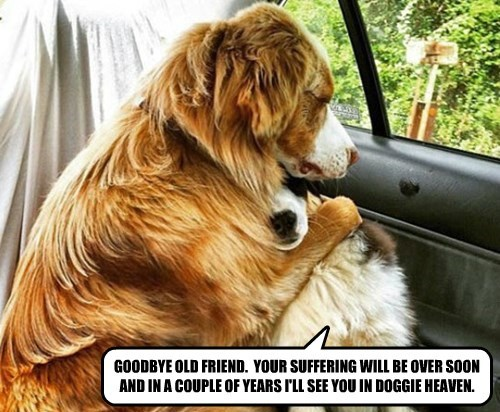 GOODBYE OLD FRIEND.  YOUR SUFFERING WILL BE OVER SOON AND IN A COUPLE OF YEARS I'LL SEE YOU IN DOGGIE HEAVEN.