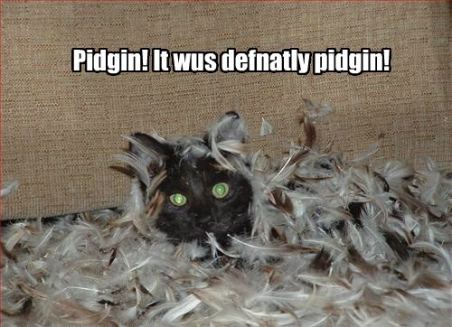 Pidgin! It wus defnatly pidgin!