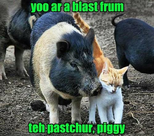 I Wanna Swine And Dine Yoo