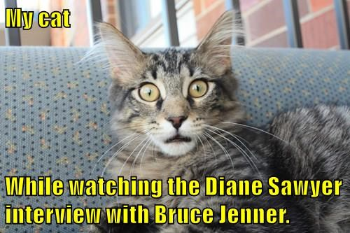 My cat  While watching the Diane Sawyer interview with Bruce Jenner.