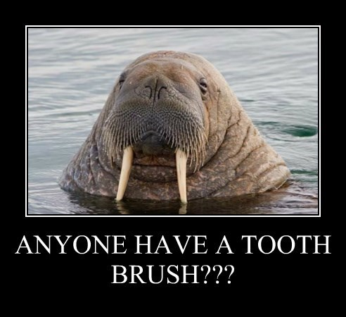 ANYONE HAVE A TOOTH BRUSH???