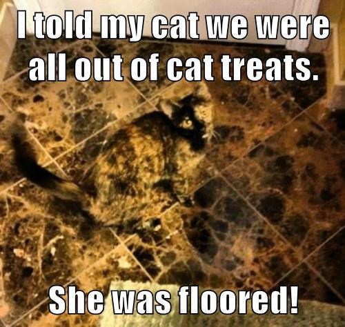 I told my cat we were all out of cat treats.  She was floored!