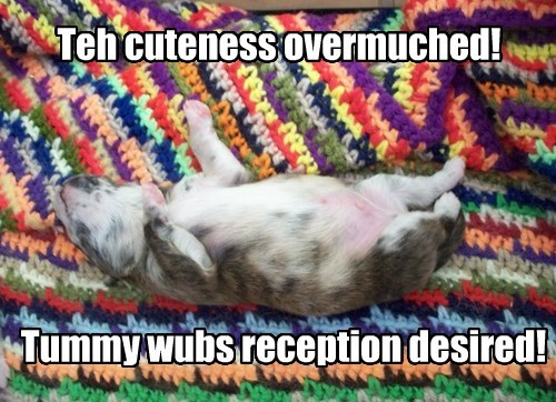 Teh cuteness overmuched!