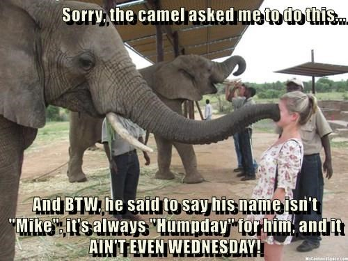 "Sorry, the camel asked me to do this...  And BTW, he said to say his name isn't ""Mike"", it's always ""Humpday"" for him, and it AIN'T EVEN WEDNESDAY!"