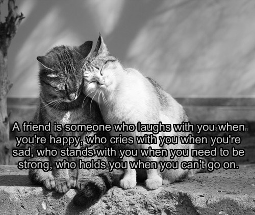 A friend is someone who laughs with you when you're happy, who cries with you when you're sad, who stands with you when you need to be strong, who holds you when you can't go on.