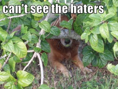 dogs,haters