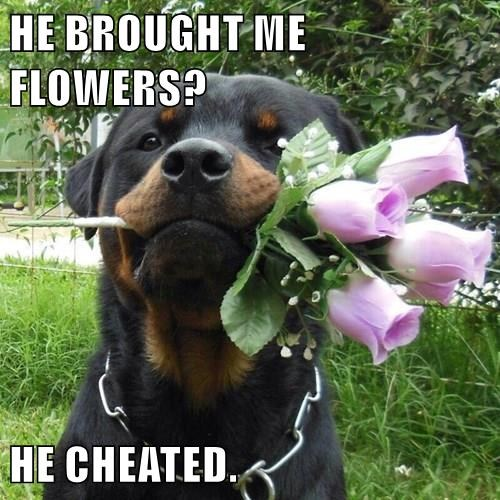 HE BROUGHT ME FLOWERS?  HE CHEATED.