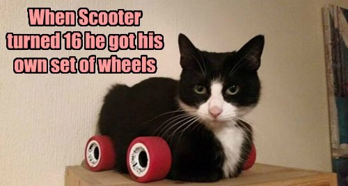 Smooth ride, Scoot!