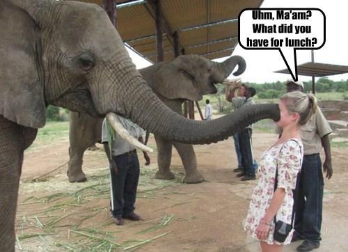 face,elephant