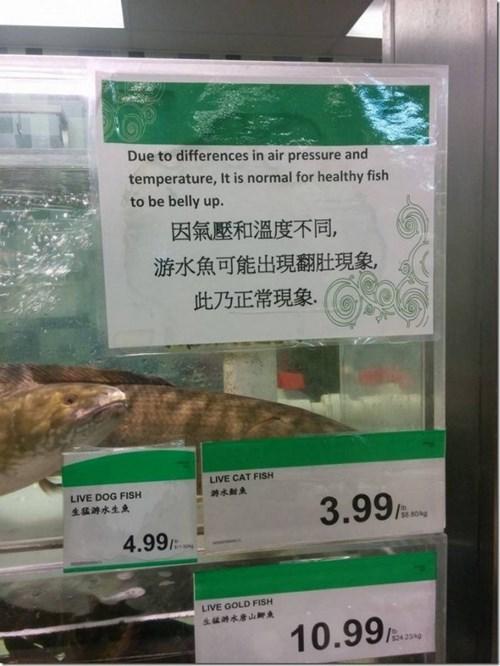 funny-fail-pic-fish-sign