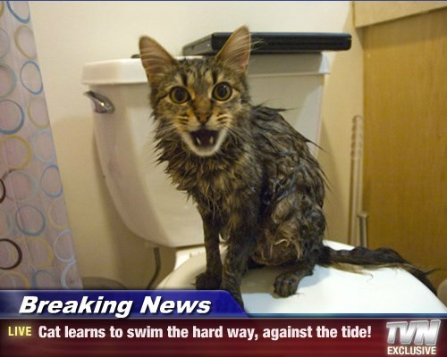 Breaking News - Cat learns to swim the hard way, against the tide!