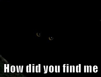 How did you find me
