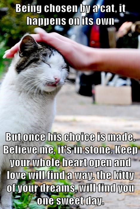 Being chosen by a cat, it happens on its own  But once his choice is made. Believe me, it's in stone. Keep your whole heart open and love will find a way. the kitty of your dreams, will find you one sweet day.